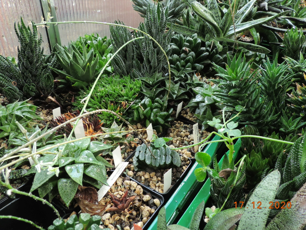 Cacti and Sukkulent in Köln, every day new flowers in the greenhouse Part 251 Bild7094