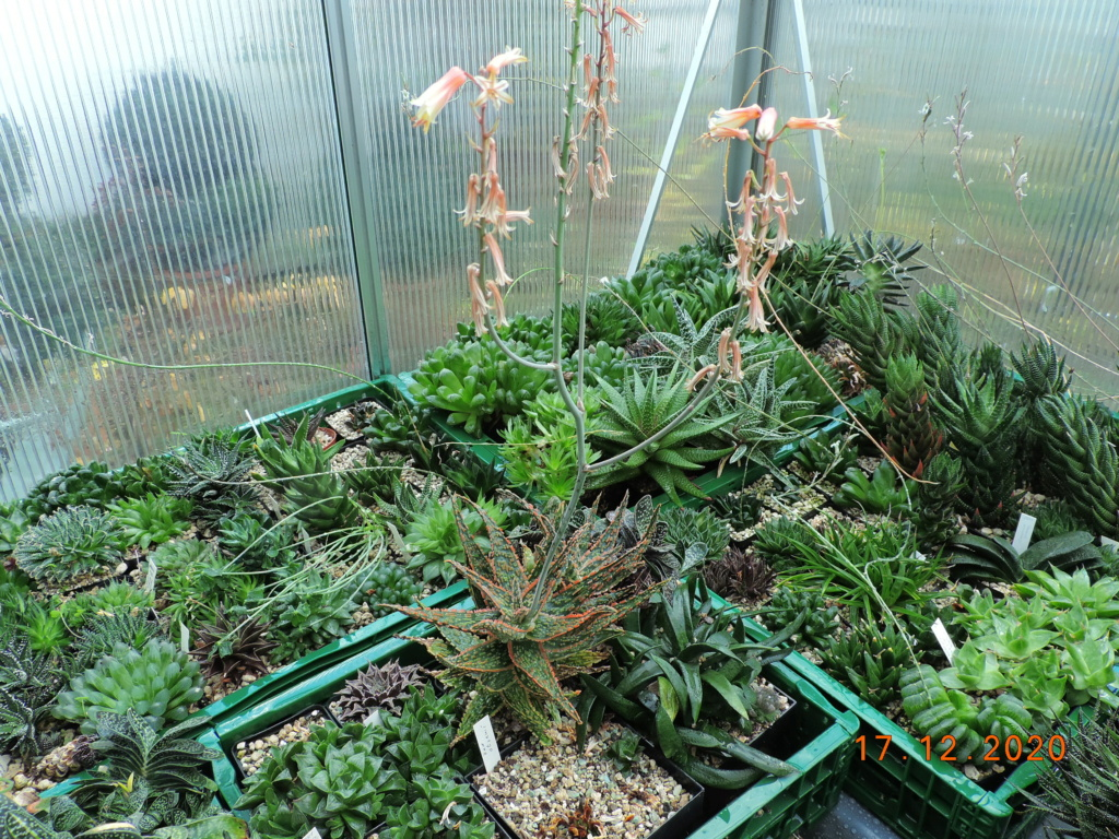 Cacti and Sukkulent in Köln, every day new flowers in the greenhouse Part 251 Bild7111
