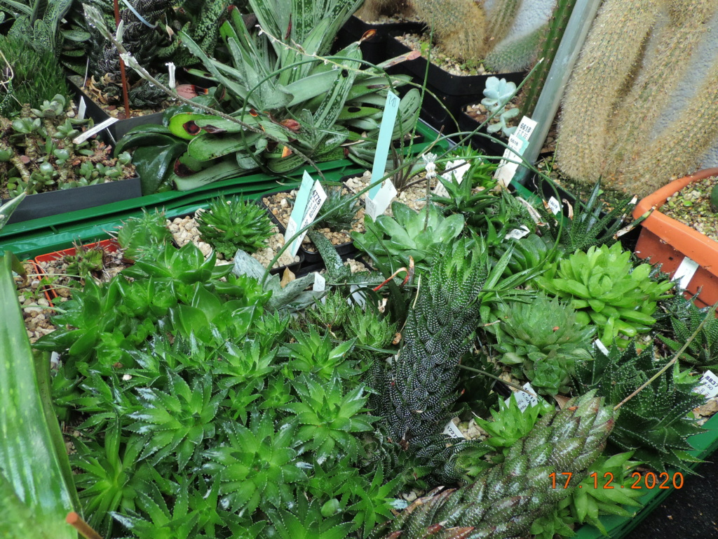 Cacti and Sukkulent in Köln, every day new flowers in the greenhouse Part 251 Bild7116