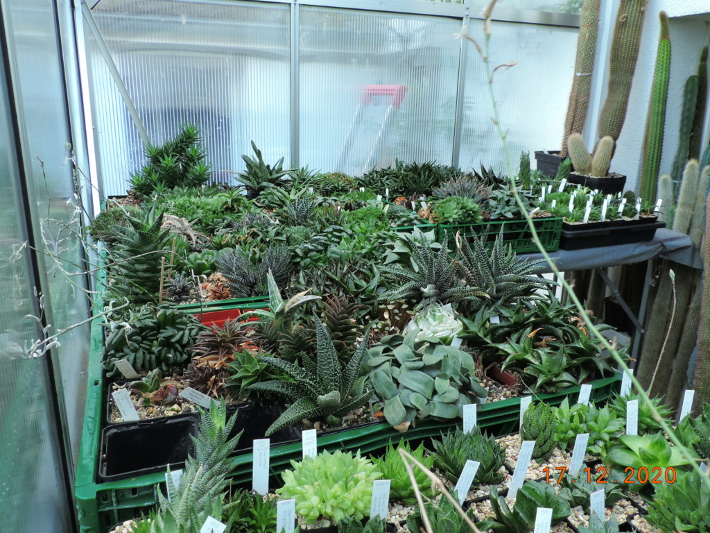 Cacti and Sukkulent in Köln, every day new flowers in the greenhouse Part 251 Bild7123