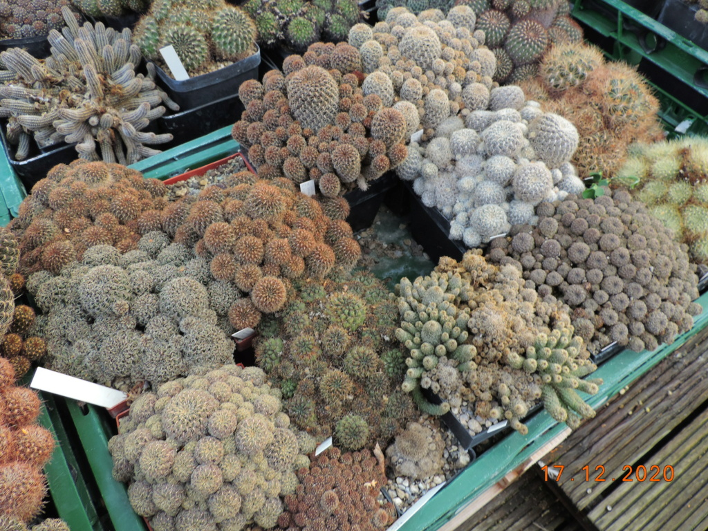 Cacti and Sukkulent in Köln, every day new flowers in the greenhouse Part 251 Bild7125