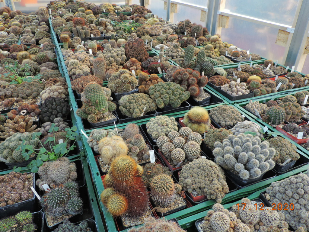 Cacti and Sukkulent in Köln, every day new flowers in the greenhouse Part 251 Bild7126