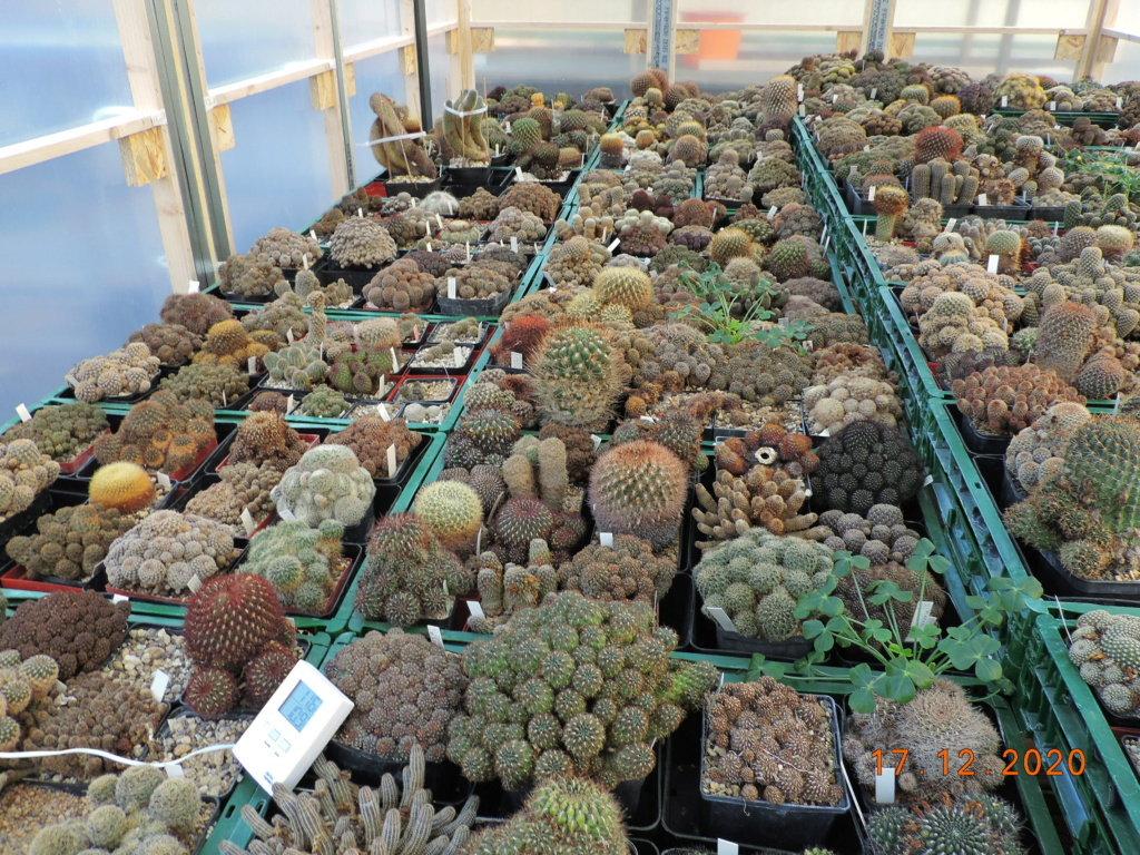 Cacti and Sukkulent in Köln, every day new flowers in the greenhouse Part 251 Bild7127