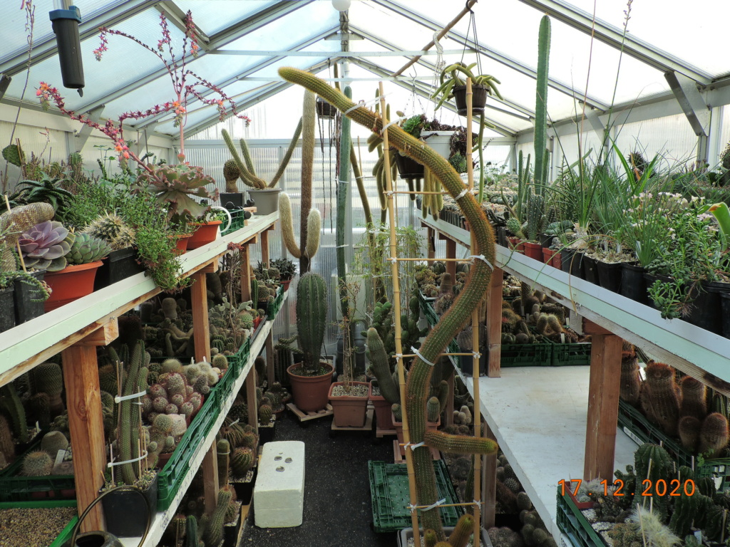 Cacti and Sukkulent in Köln, every day new flowers in the greenhouse Part 251 Bild7128