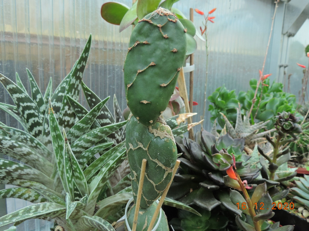 Cacti and Sukkulent in Köln, every day new flowers in the greenhouse Part 251 Bild7138