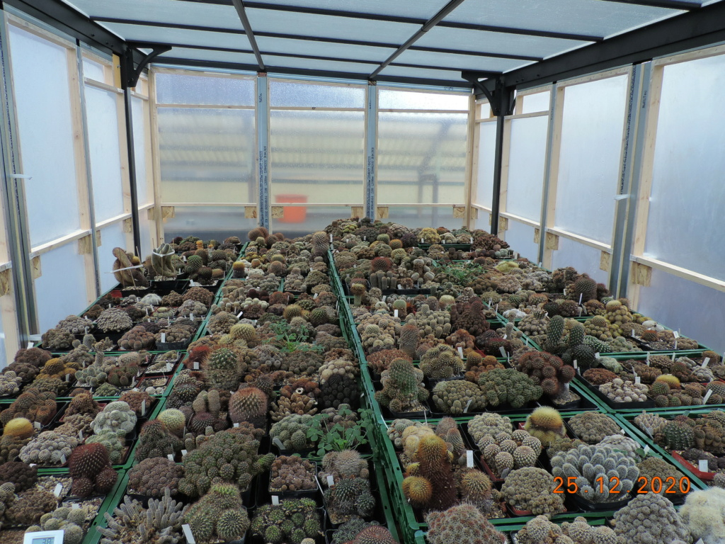 Cacti and Sukkulent in Köln, every day new flowers in the greenhouse Part 251 Bild7160