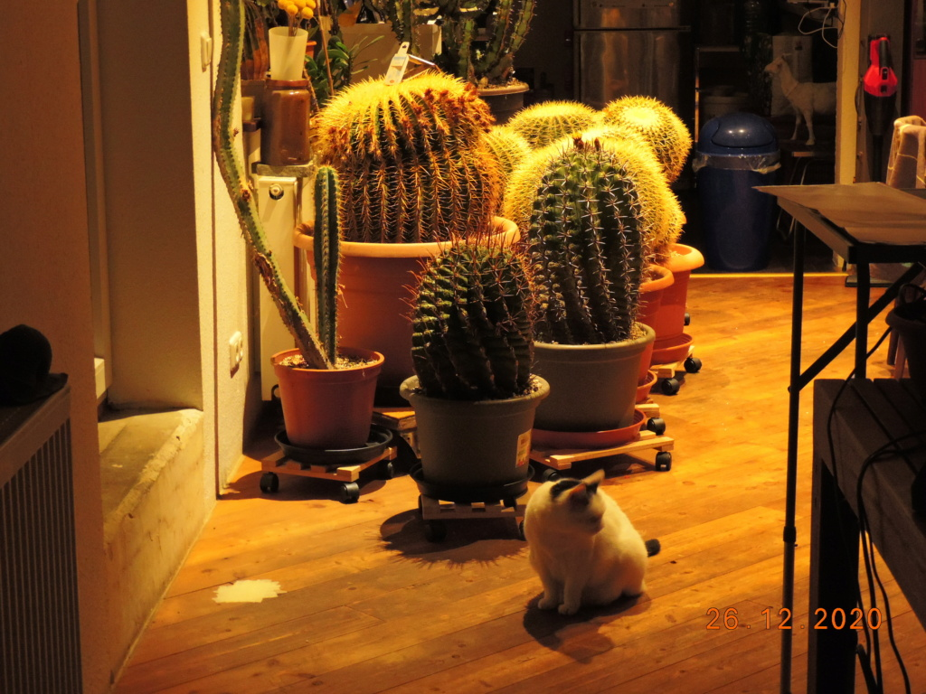 Cacti and Sukkulent in Köln, every day new flowers in the greenhouse Part 251 Bild7163