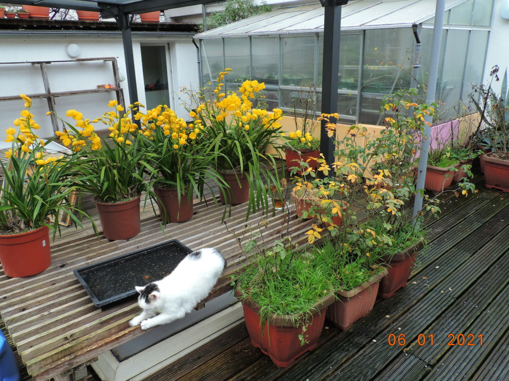 Cacti and Sukkulent in Köln, every day new flowers in the greenhouse Part 251 Bild7164