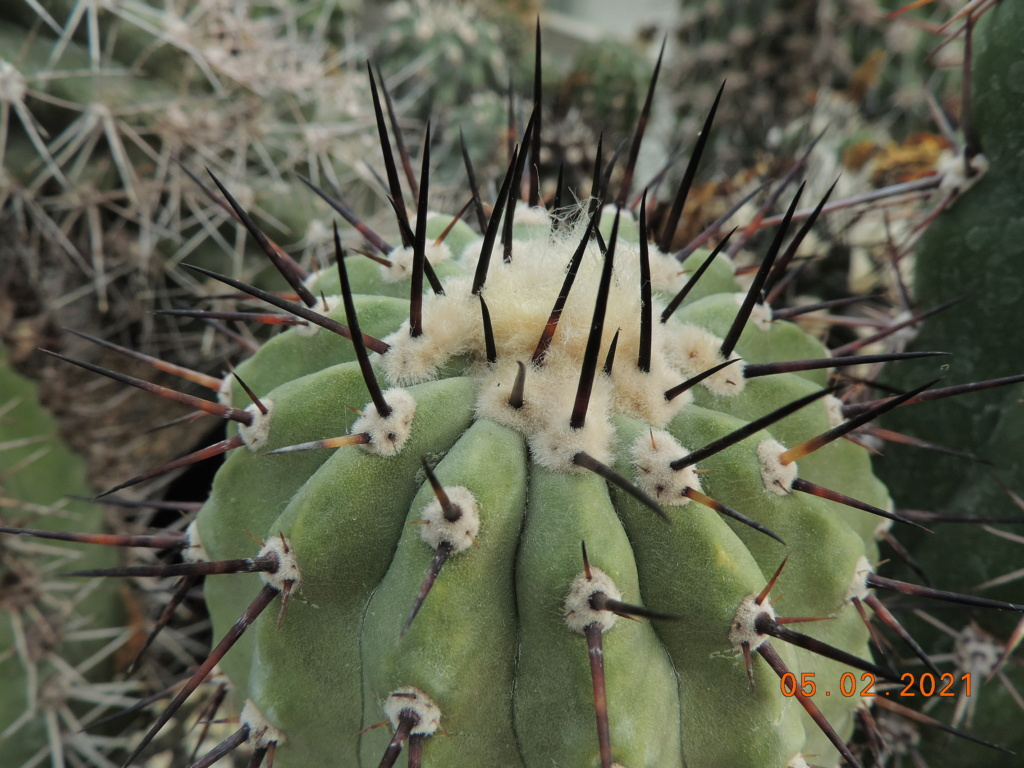 Cacti and Sukkulent in Köln, every day new flowers in the greenhouse Part 253 Bild7265