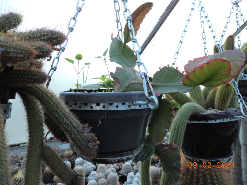 Cacti and Sukkulent in Köln, every day new flowers in the greenhouse Part 253 Bild7286