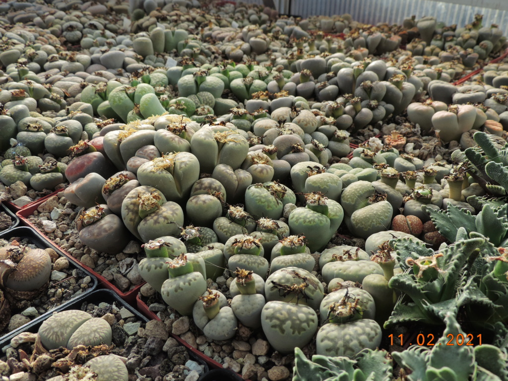 Cacti and Sukkulent in Köln, every day new flowers in the greenhouse Part 253 Bild7298