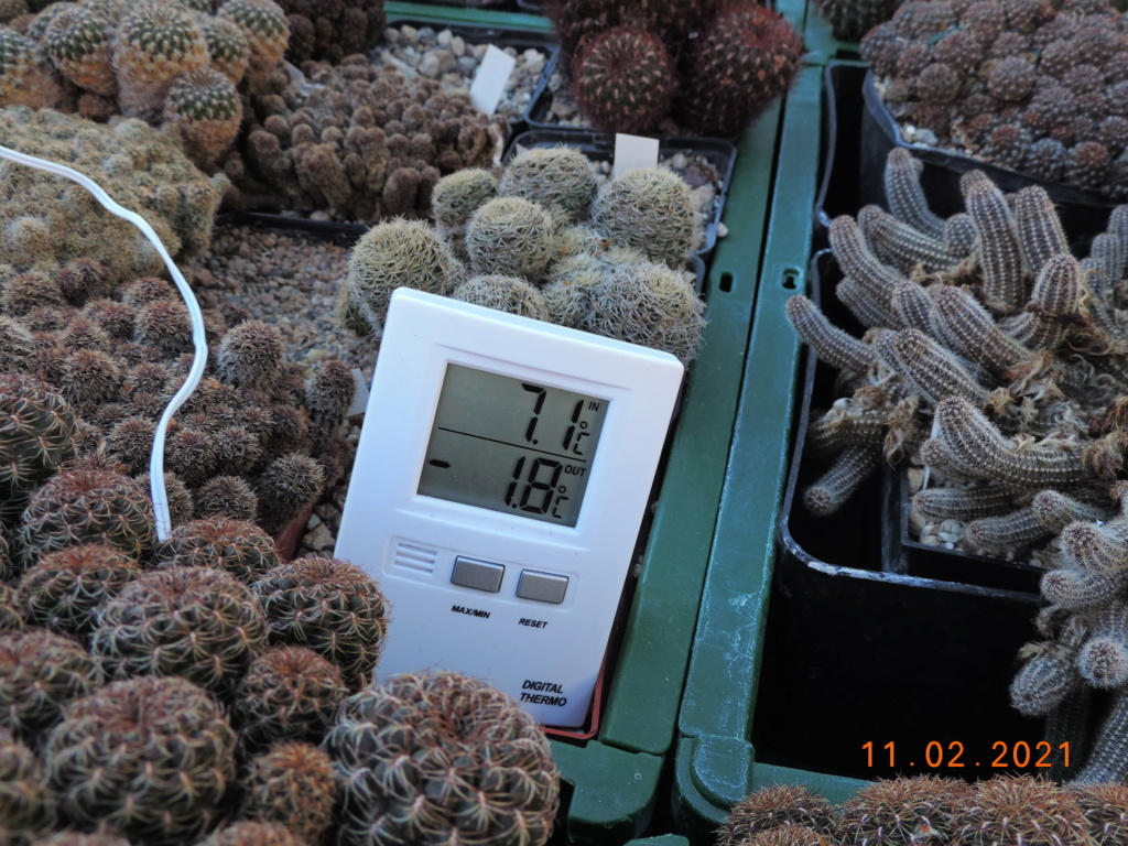 Cacti and Sukkulent in Köln, every day new flowers in the greenhouse Part 253 Bild7299