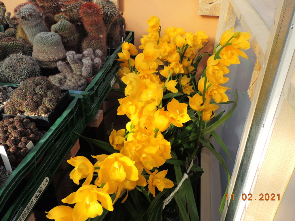 Cacti and Sukkulent in Köln, every day new flowers in the greenhouse Part 253 Bild7300