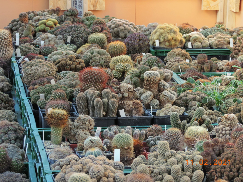 Cacti and Sukkulent in Köln, every day new flowers in the greenhouse Part 253 Bild7301