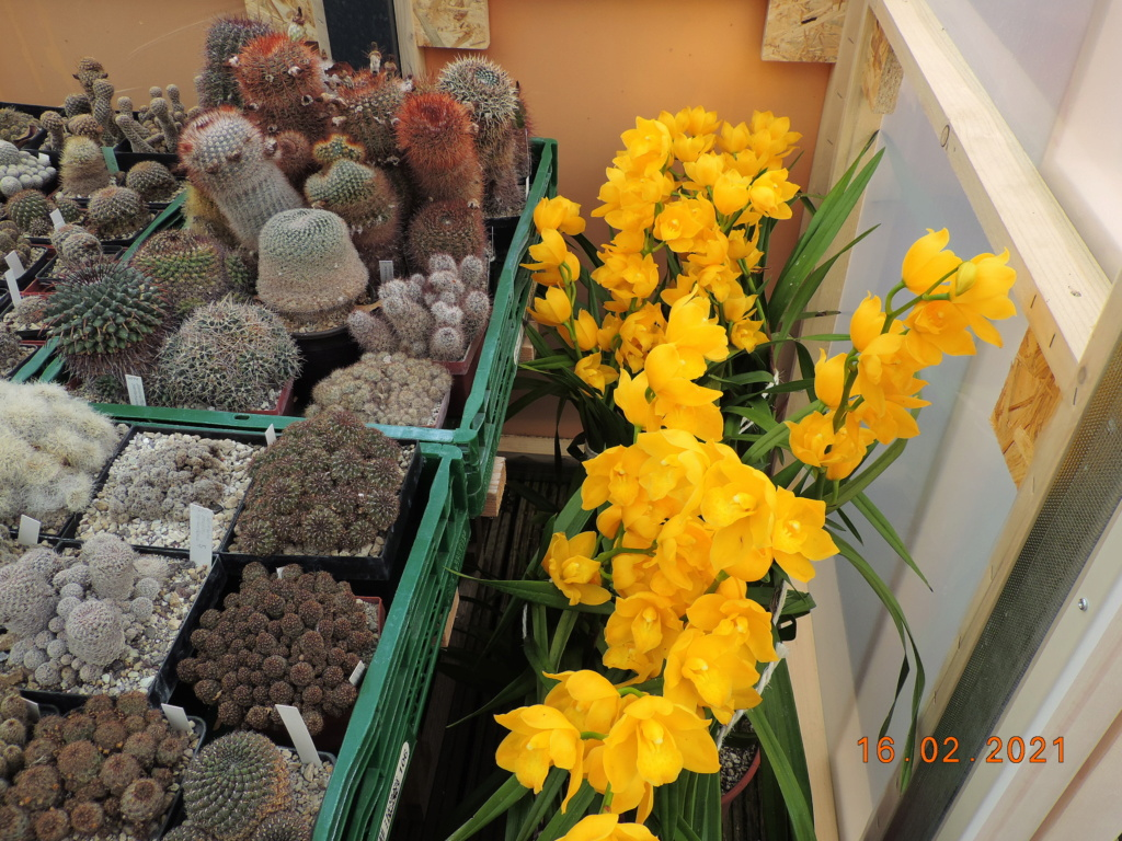 Cacti and Sukkulent in Köln, every day new flowers in the greenhouse Part 253 Bild7308