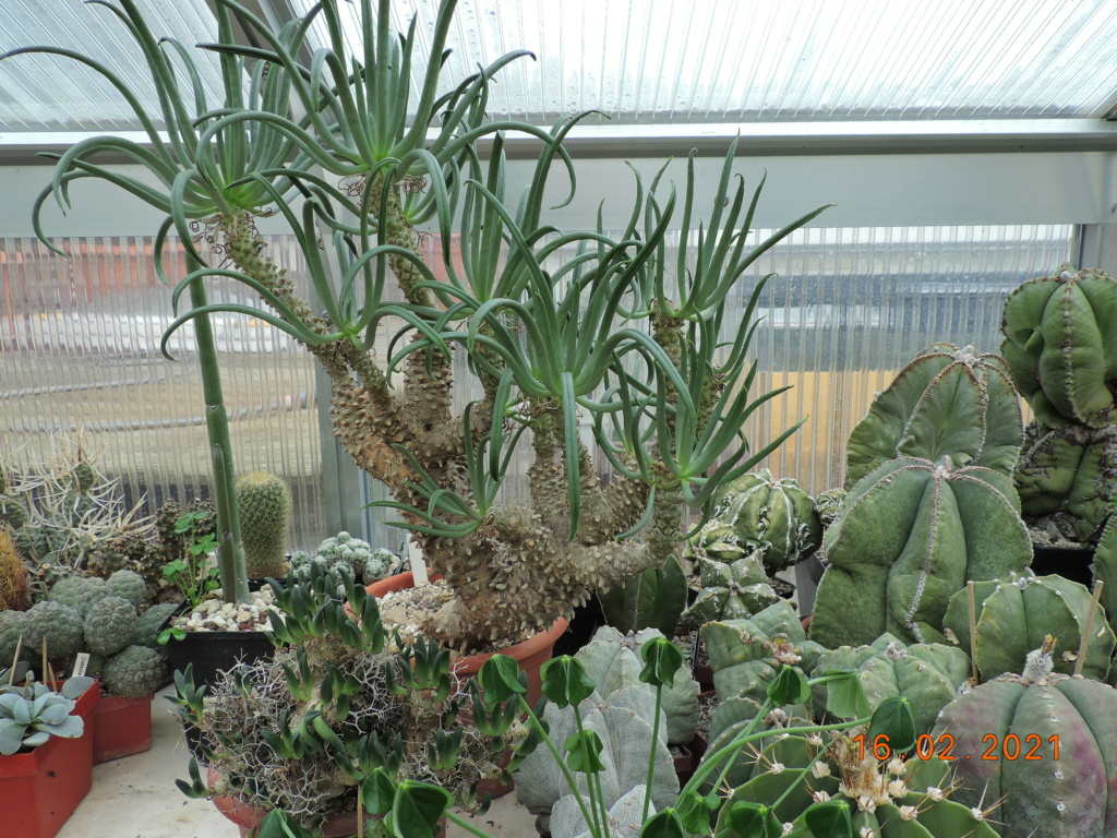 Cacti and Sukkulent in Köln, every day new flowers in the greenhouse Part 253 Bild7315