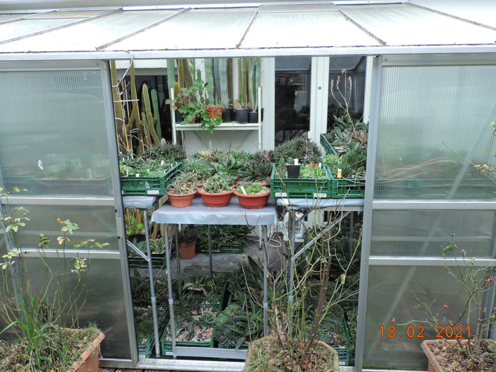 Cacti and Sukkulent in Köln, every day new flowers in the greenhouse Part 253 Bild7322