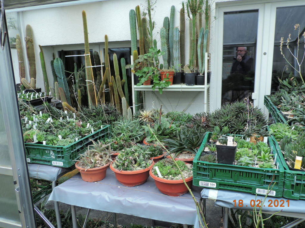 Cacti and Sukkulent in Köln, every day new flowers in the greenhouse Part 253 Bild7323