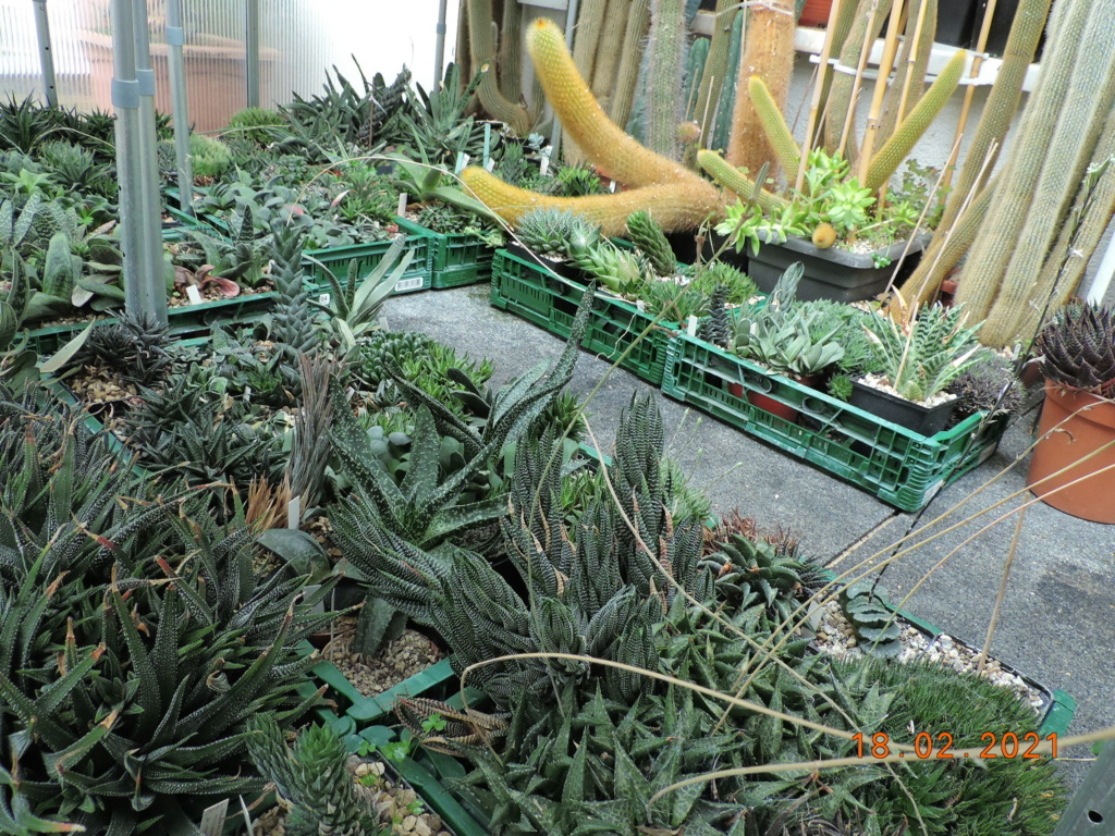 Cacti and Sukkulent in Köln, every day new flowers in the greenhouse Part 253 Bild7324