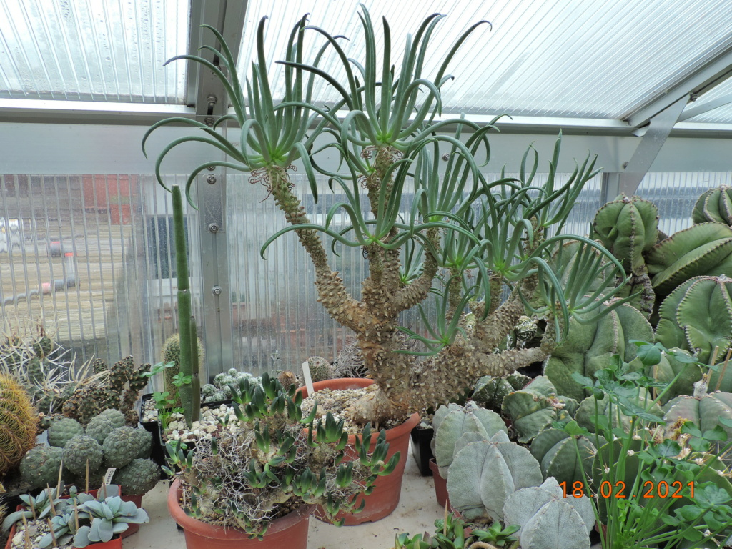 Cacti and Sukkulent in Köln, every day new flowers in the greenhouse Part 253 Bild7325