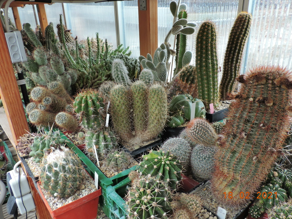 Cacti and Sukkulent in Köln, every day new flowers in the greenhouse Part 253 Bild7326