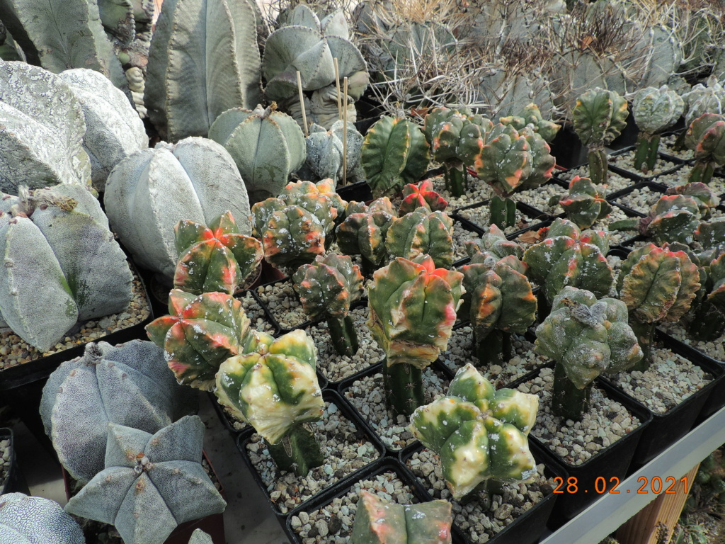 Cacti and Sukkulent in Köln, every day new flowers in the greenhouse Part 253 Bild7365