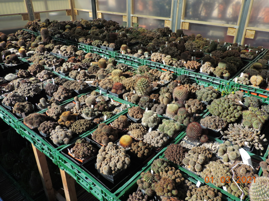 Cacti and Sukkulent in Köln, every day new flowers in the greenhouse Part 253 Bild7372