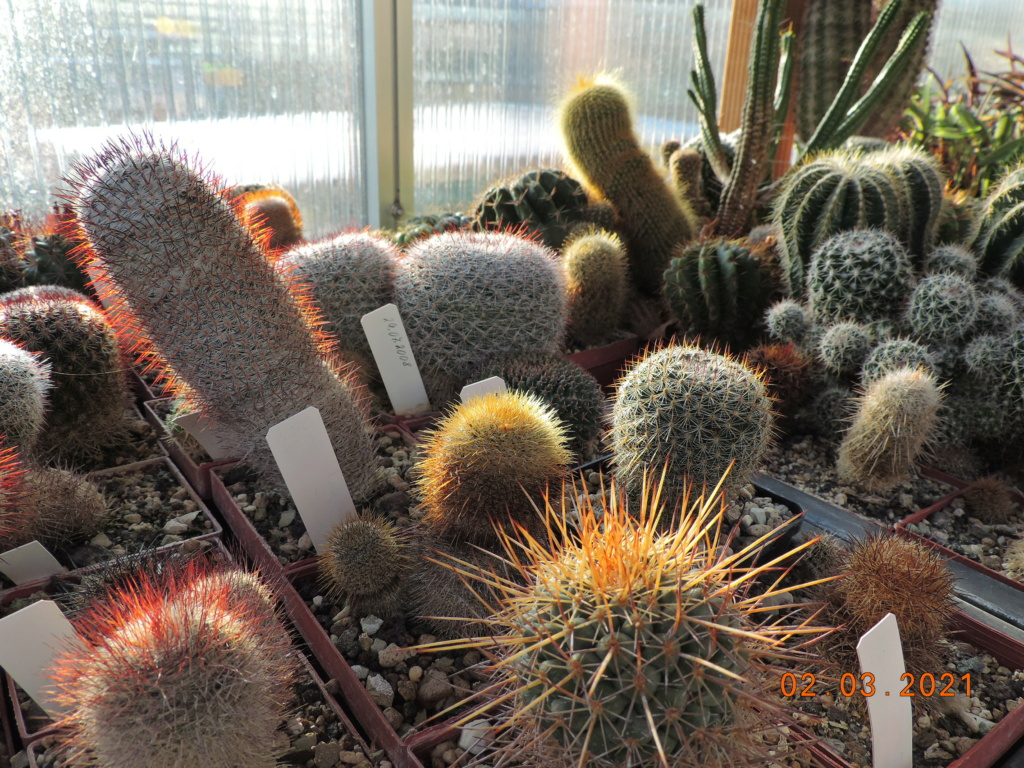 Cacti and Sukkulent in Köln, every day new flowers in the greenhouse Part 253 Bild7377