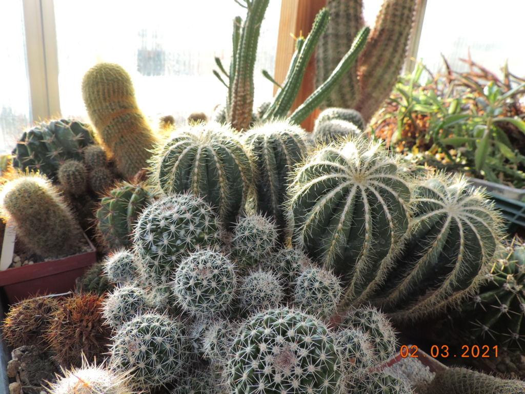 Cacti and Sukkulent in Köln, every day new flowers in the greenhouse Part 253 Bild7378