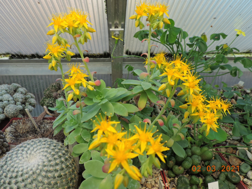 Cacti and Sukkulent in Köln, every day new flowers in the greenhouse Part 253 Bild7379