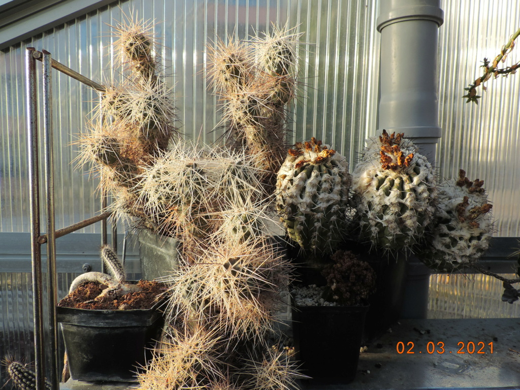 Cacti and Sukkulent in Köln, every day new flowers in the greenhouse Part 253 Bild7384