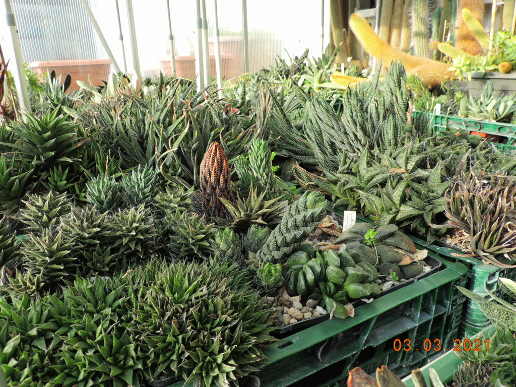 Cacti and Sukkulent in Köln, every day new flowers in the greenhouse Part 253 Bild7387