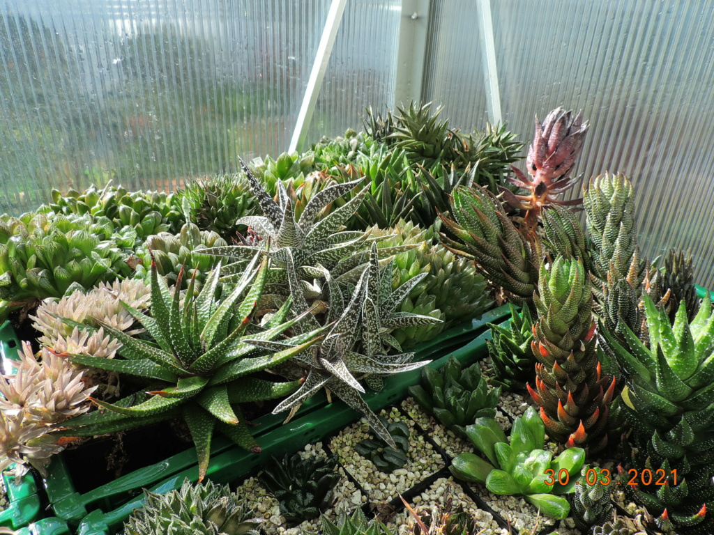 Cacti and Sukkulent in Köln, every day new flowers in the greenhouse Part 255 Bild7493
