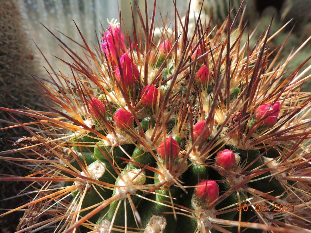Cacti and Sukkulent in Köln, every day new flowers in the greenhouse Part 255 Bild7508
