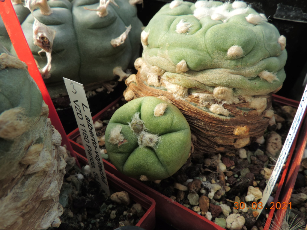 Cacti and Sukkulent in Köln, every day new flowers in the greenhouse Part 255 Bild7512