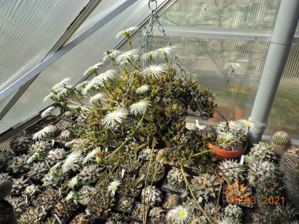 Cacti and Sukkulent in Köln, every day new flowers in the greenhouse Part 255 Bild7519