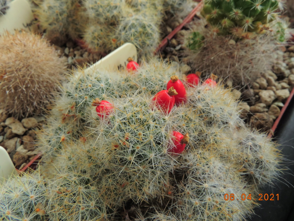 Cacti and Sukkulent in Köln, every day new flowers in the greenhouse Part 255 Bild7537