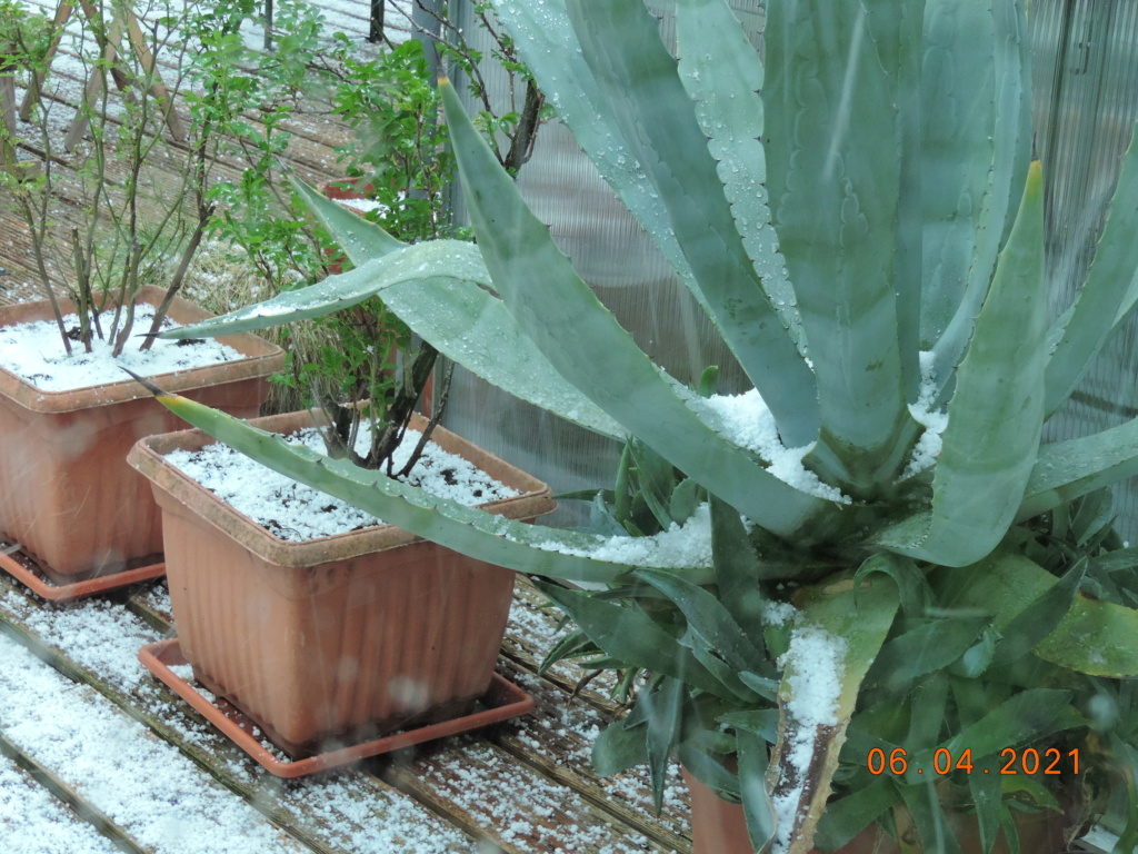 Cacti and Sukkulent in Köln, every day new flowers in the greenhouse Part 255 Bild7543