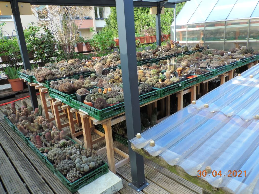 Cacti and Sukkulent in Köln, every day new flowers in the greenhouse Part 258 Bild7752