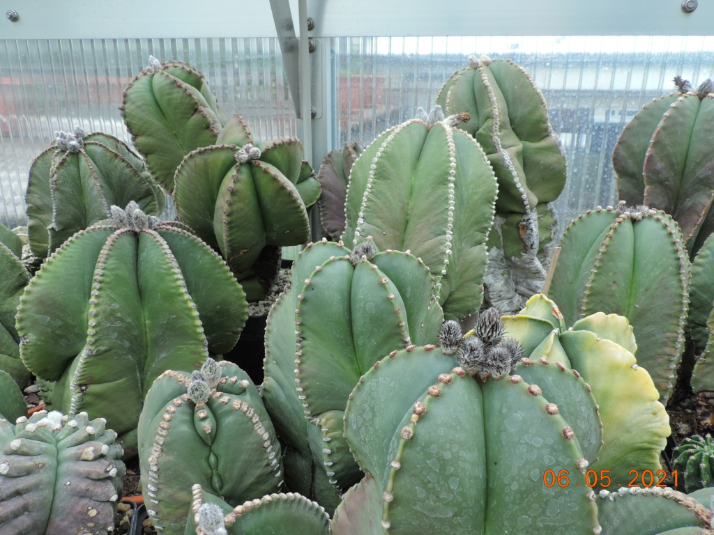 Cacti and Sukkulent in Köln, every day new flowers in the greenhouse Part 258 Bild7763