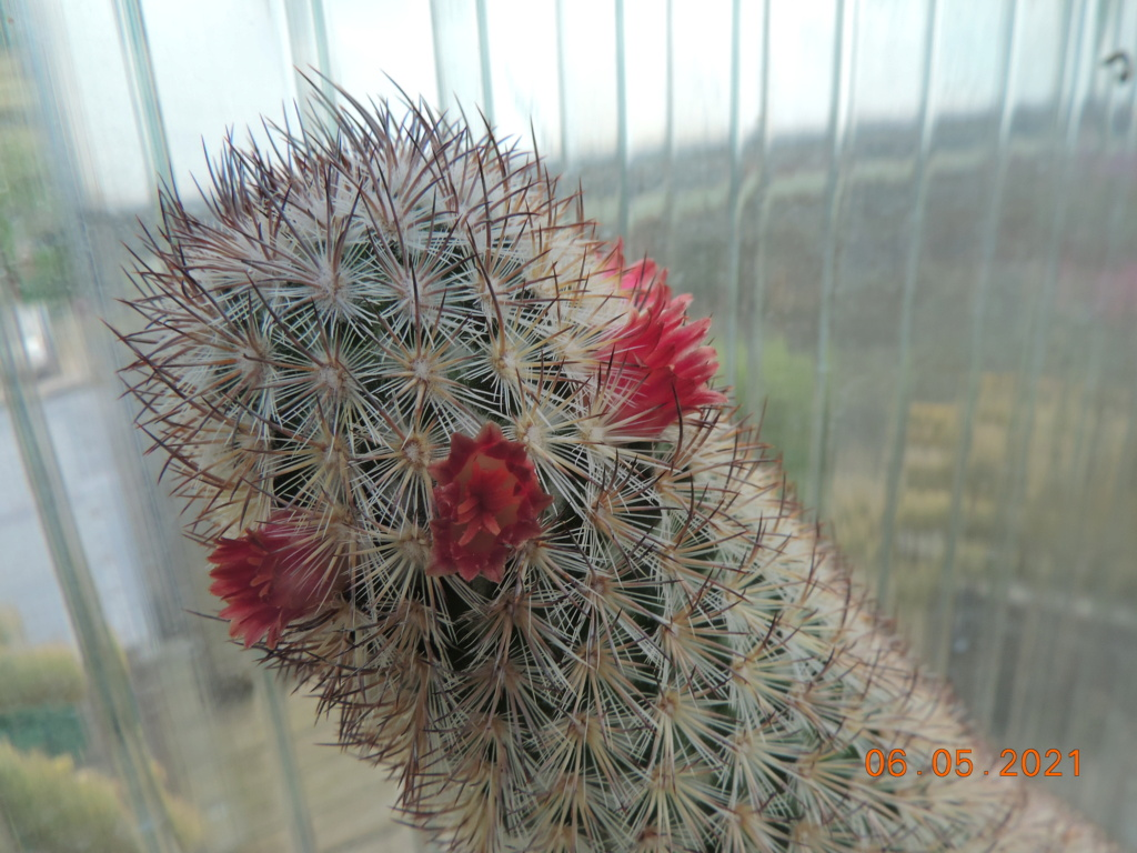 Cacti and Sukkulent in Köln, every day new flowers in the greenhouse Part 258 Bild7773