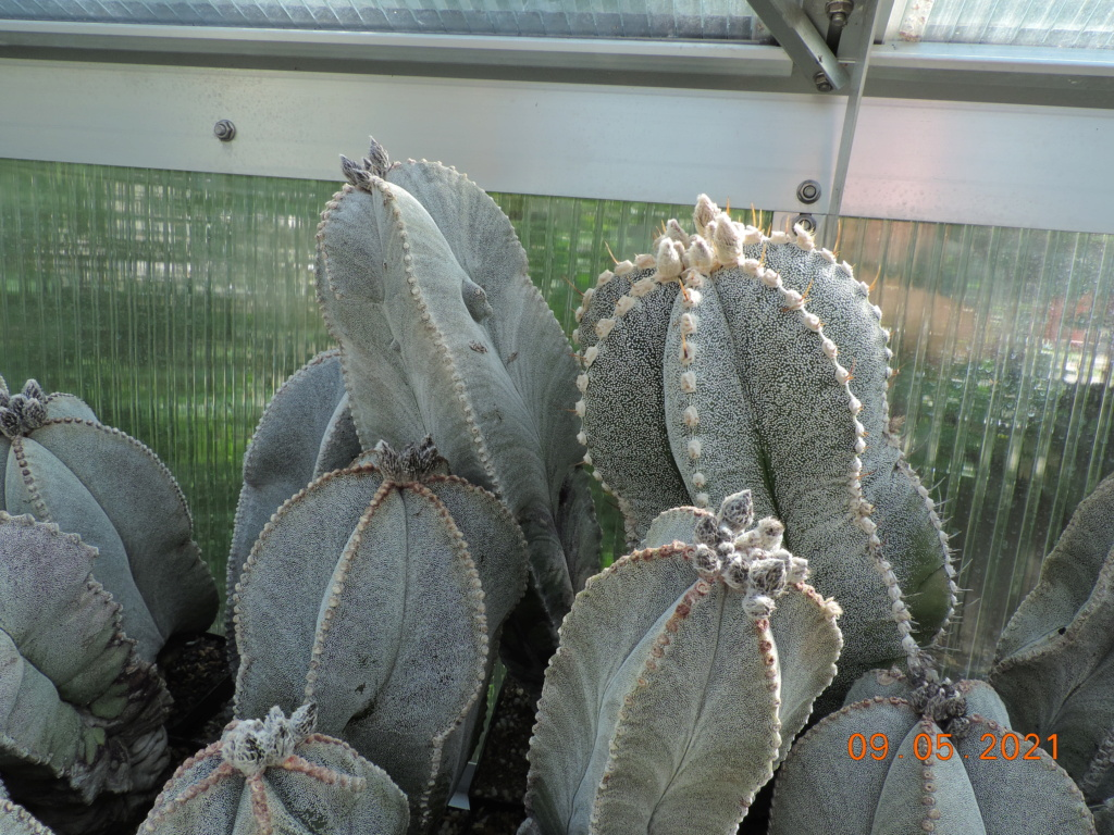 Cacti and Sukkulent in Köln, every day new flowers in the greenhouse Part 258 Bild7791