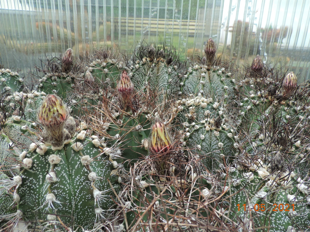 Cacti and Sukkulent in Köln, every day new flowers in the greenhouse Part 258 Bild7792