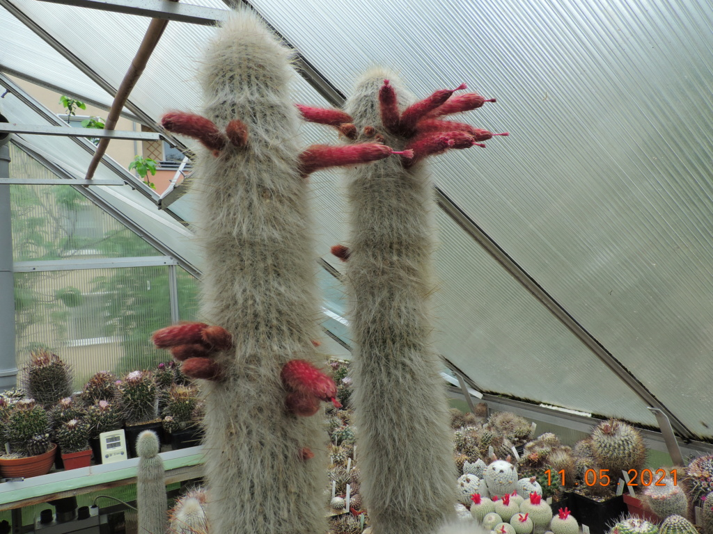 Cacti and Sukkulent in Köln, every day new flowers in the greenhouse Part 258 Bild7801