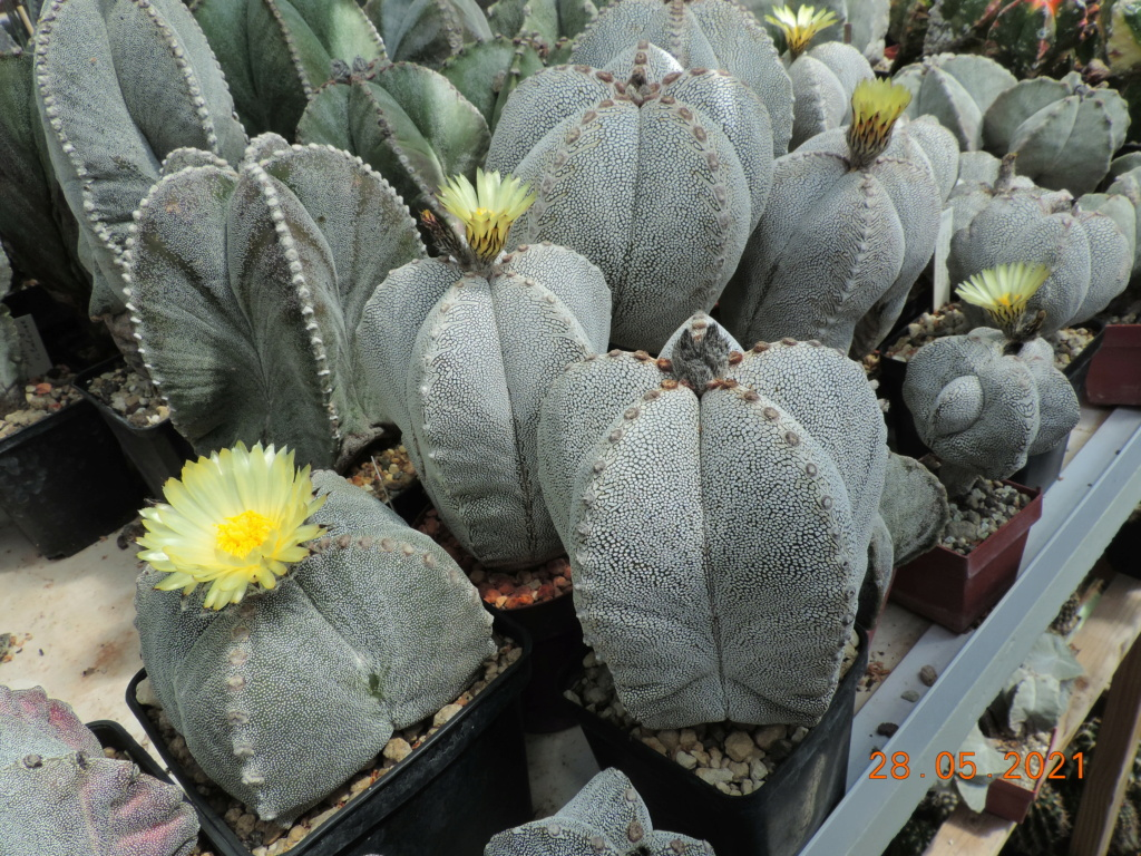 Cacti and Sukkulent in Köln, every day new flowers in the greenhouse Part 260 Bild7981