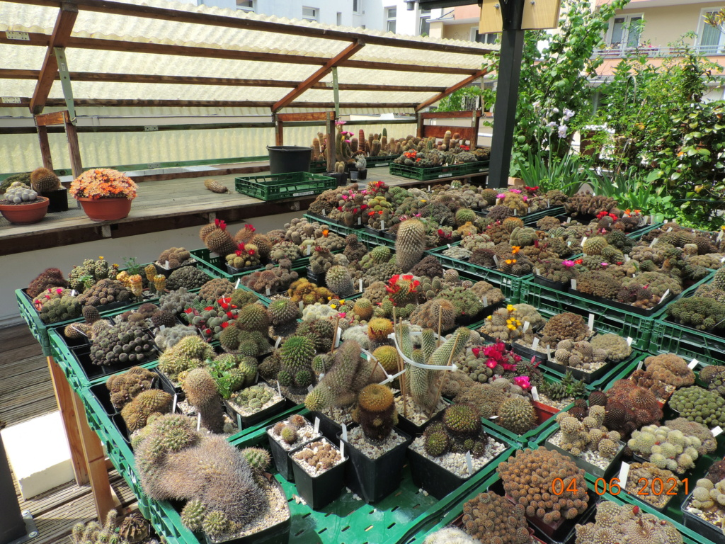 Cacti and Sukkulent in Köln, every day new flowers in the greenhouse Part 260 Bild8010
