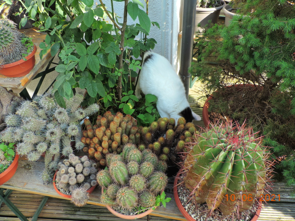 Cacti and Sukkulent in Köln, every day new flowers in the greenhouse Part 260 Bild8040