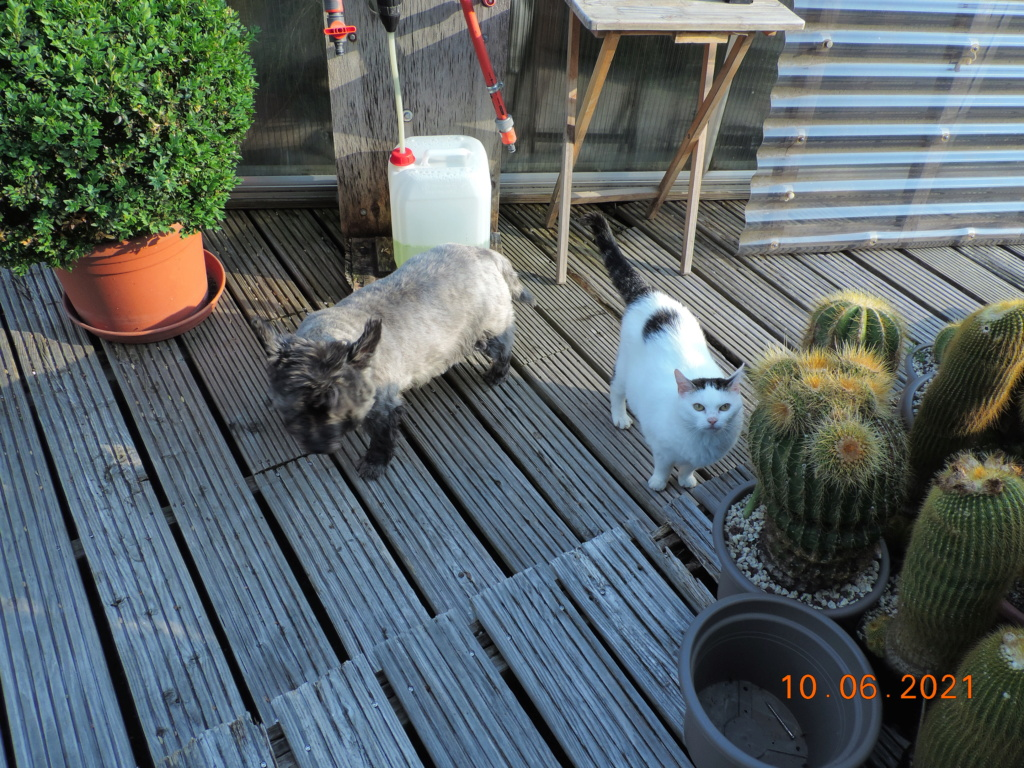Cacti and Sukkulent in Köln, every day new flowers in the greenhouse Part 260 Bild8042