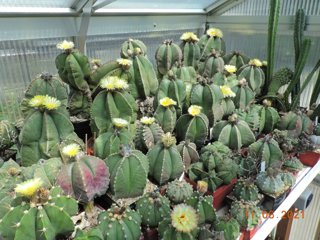 Cacti and Sukkulent in Köln, every day new flowers in the greenhouse Part 260 Bild8046