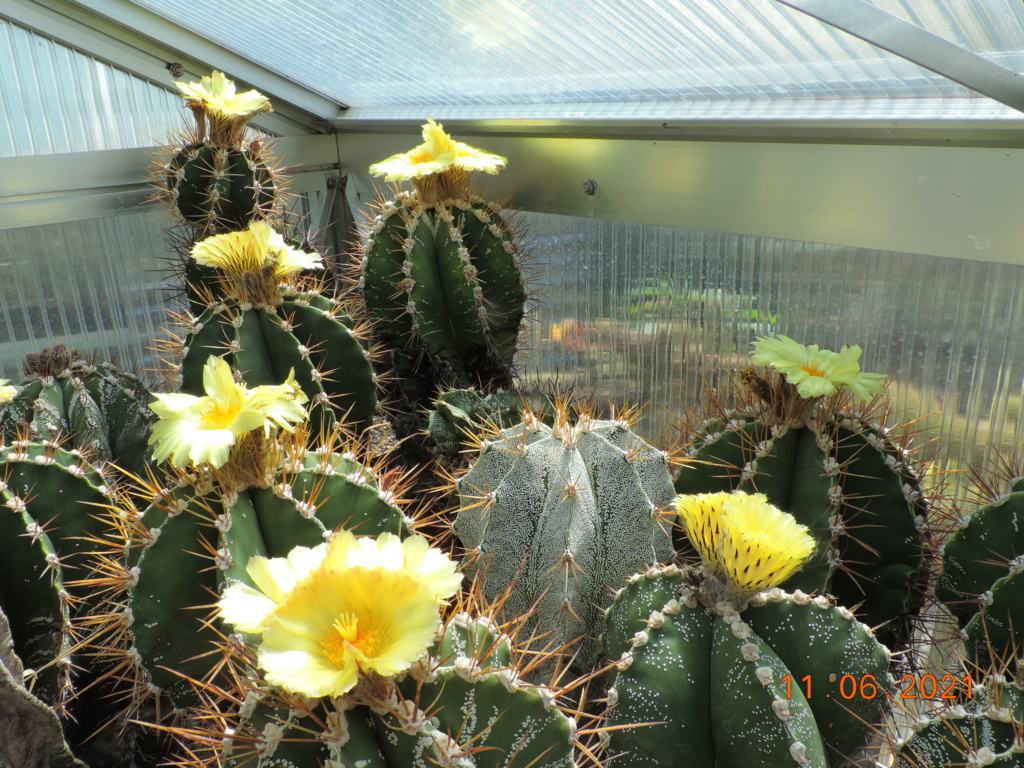Cacti and Sukkulent in Köln, every day new flowers in the greenhouse Part 260 Bild8047
